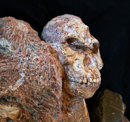 420_82085_vignette_visage-de-stw-573-australopithecus-ronald-clarke.jpg